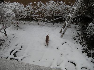 ジルダ 初雪01