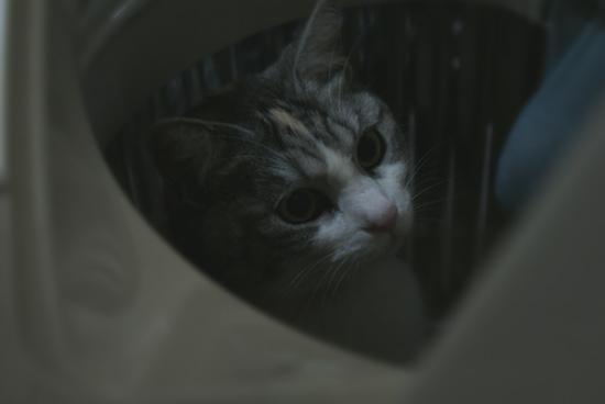 お風呂猫05