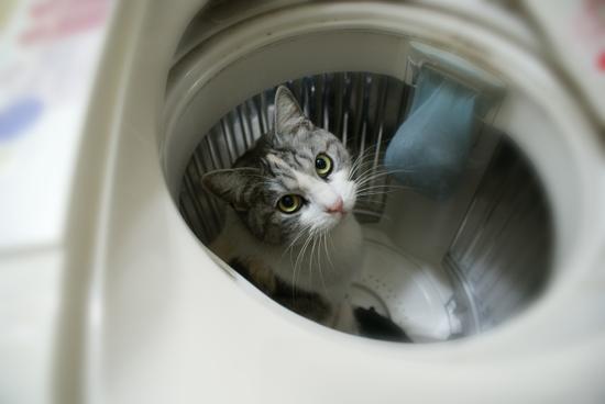 お風呂猫03