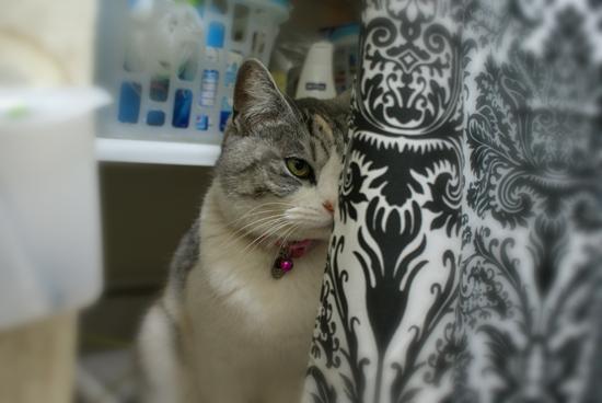 お風呂猫09