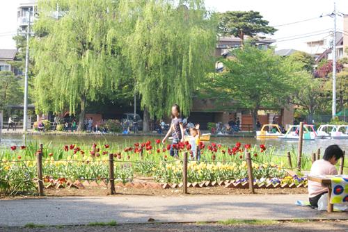 石神井公園01