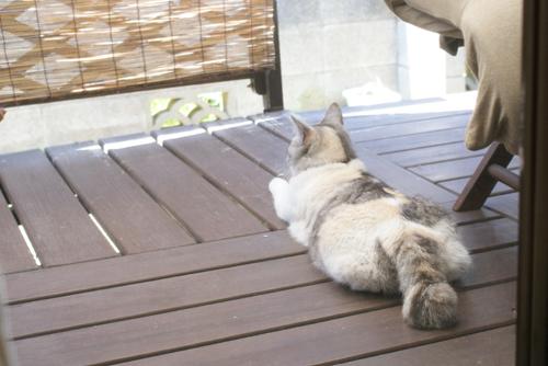 モツ猫見01