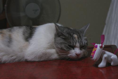 猫サポーター01