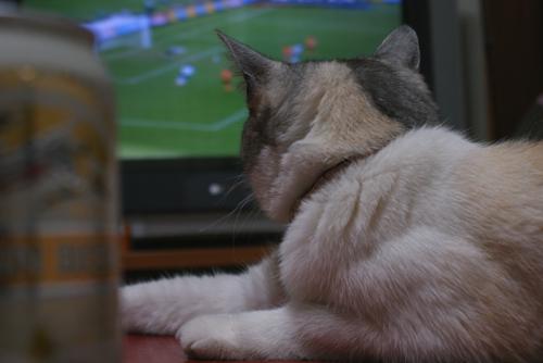 猫サポーター02