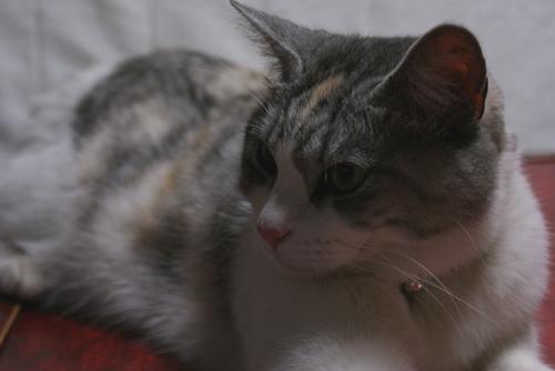 猫サポーター04