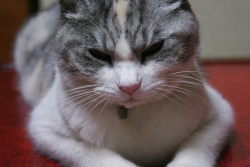 猫じゃらしと美優04