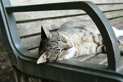 石神井公園の猫03