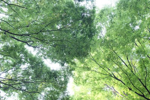 石神井公園の夏01