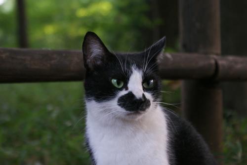石神井公園の猫04