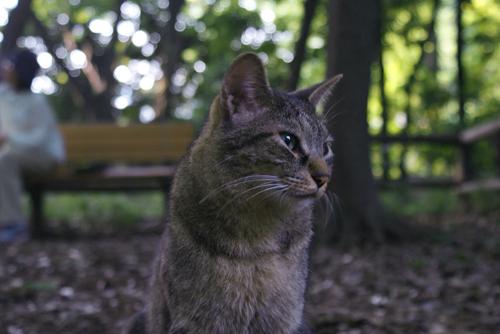 石神井公園の猫05