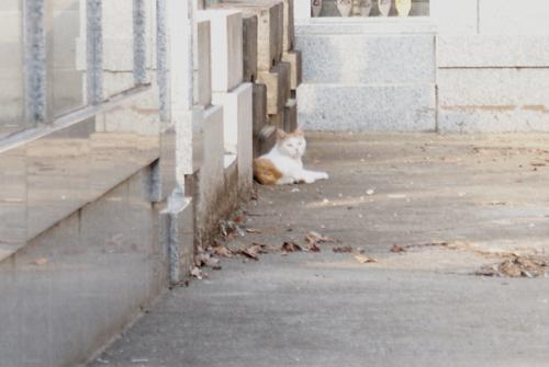 石神井の猫