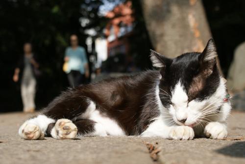 井之頭cat