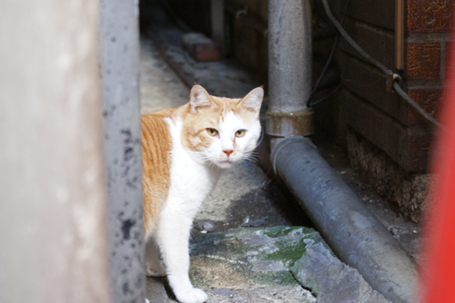 吉祥寺猫03