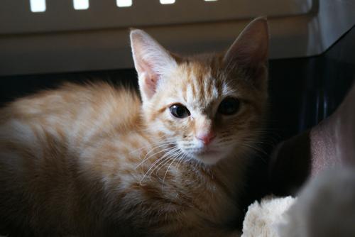 子猫ちゃん01