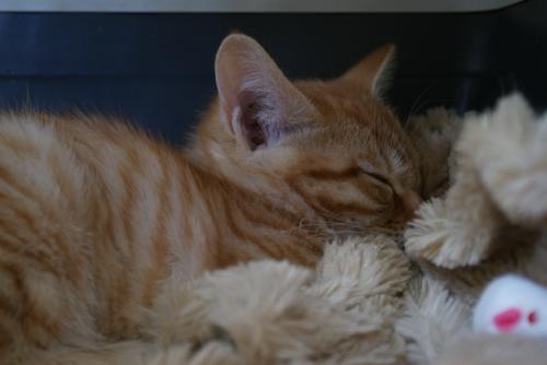 子猫ちゃん04