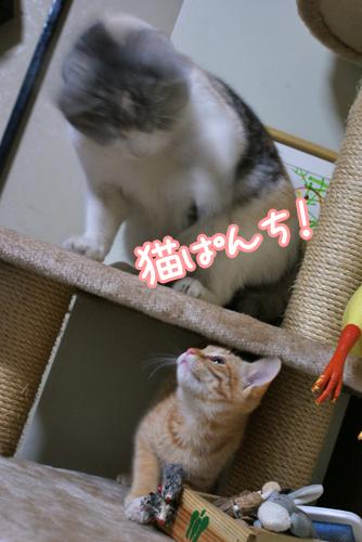 美優猫パンチ