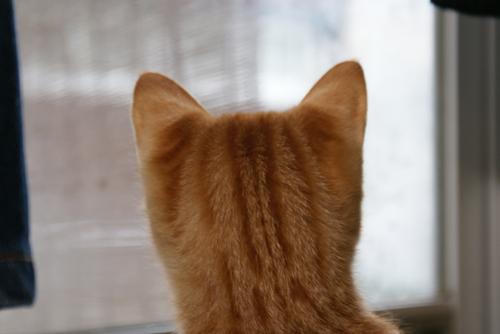 風花 窓の外01