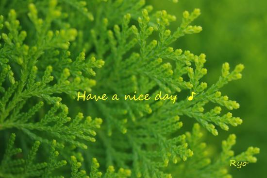 nice+day_convert_20101007202622.jpg