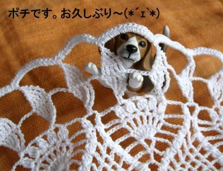 potikao_convert_20100422071119.jpg