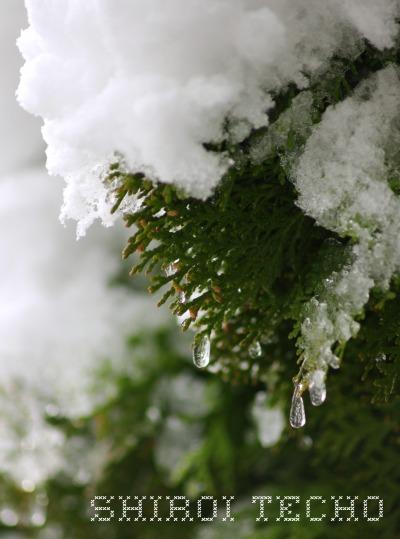 snow5t.jpg