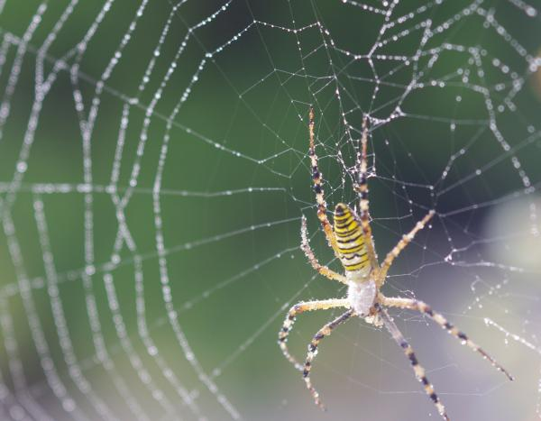 spider_L.jpg
