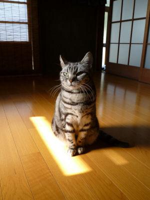 しま的日光浴3