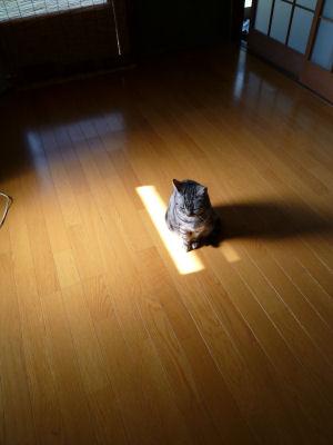 しま的日光浴2