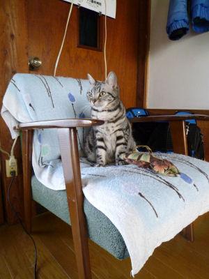 椅子の新定位置1