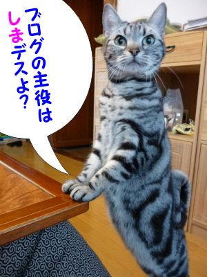 しまが主役!