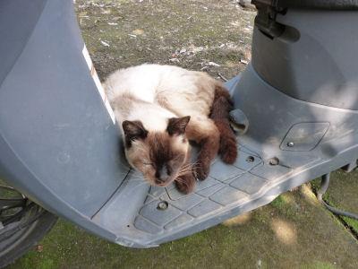 涼む実家猫2