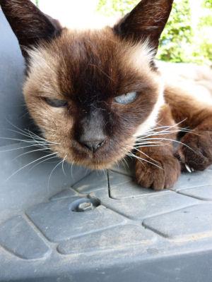 涼む実家猫3