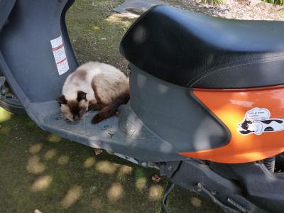 涼む実家猫1