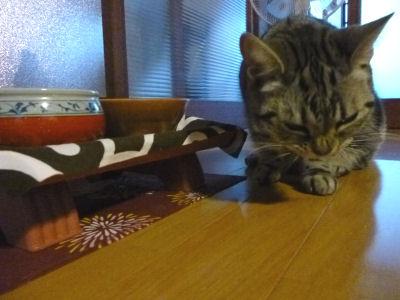鼻ジワ立ててカリカリを食う猫