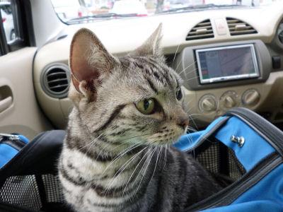 車中にて1