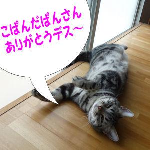 ダラダラな猫