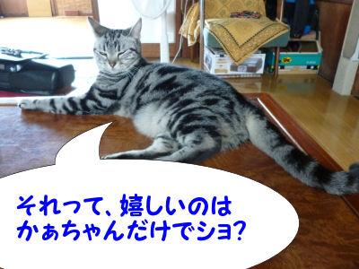 猫は酒を飲まない