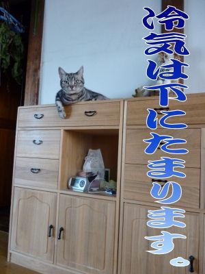 ヒトと猫の折衷案?