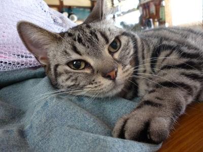 浮気を嗅ぎつける猫2