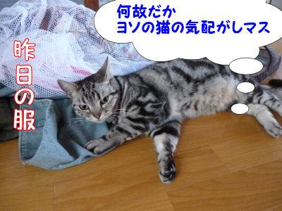 浮気を嗅ぎつける猫1