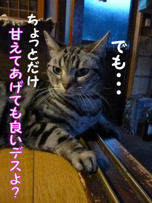 猫の感覚3