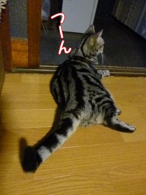 猫の感覚2