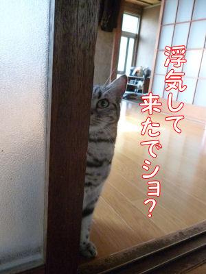 猫の感覚1