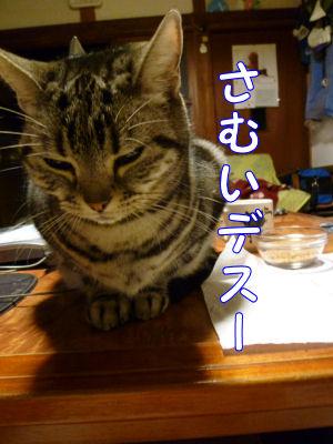 猫は寒がり2