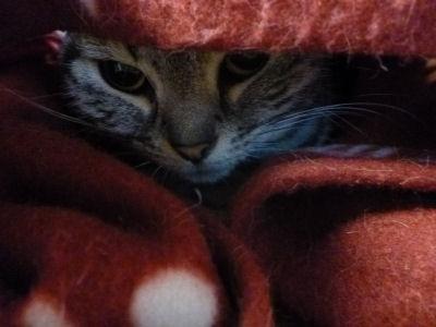 寒がりな猫4