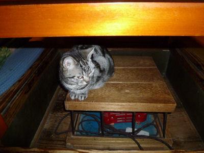 寒がりな猫1
