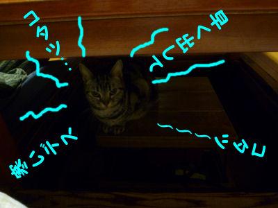 寒がりな猫2