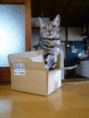 めずらしく箱入り猫