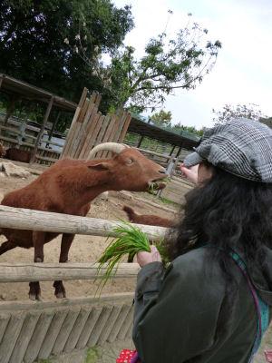 ヤギにエサをやるワタクシ
