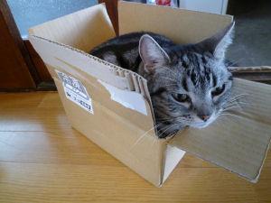 …と、箱!