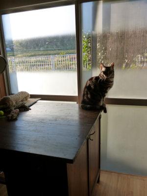 「特等席」を待つ猫